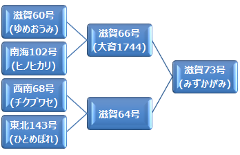 kei_mizukagami